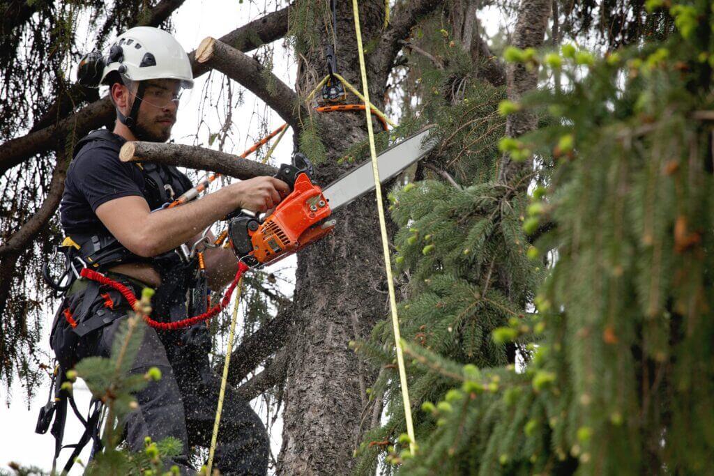Baume professionell schneiden wien  scaled