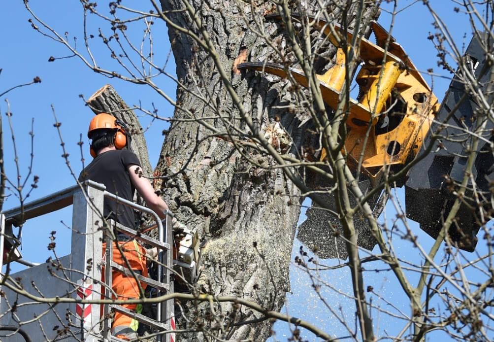 Baumschnitt Baumpflege Baumfallung